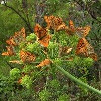 Бабочки :: Марина Таврова