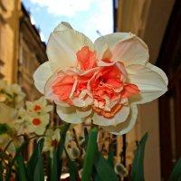 Городские цветы... :: Galina Dzubina