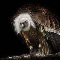 noble bird :: ian 35AWARDS