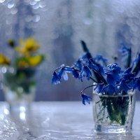 Первоцветы. :: Марина Соколова