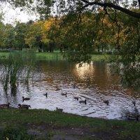Вечер в парке. :: Татьяна Гусева