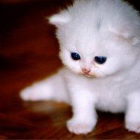 Котик :: Танюша
