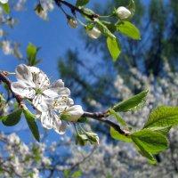 Весна :: Grey Bishop