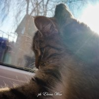 у окна... :: Elena Wise