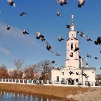 Со светлой Паской Христовой :: Александр Бойченко
