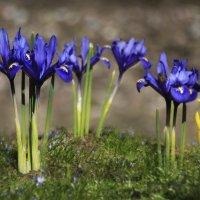 Весенние цветы :: Lusi Almaz