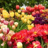 Разноцветная полянка :: Татьяна Лобанова