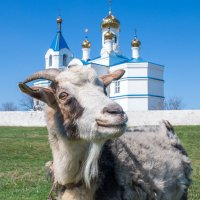 ку-ку :: Дина Горбачева