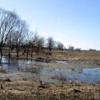 на болоте... :: Назар