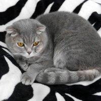 Наш кот. :: Alex 711402