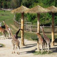В зоопарке Праги :: dli1953