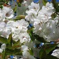 Ее Светлость Весна :: Mari_L