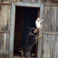 Давай, лезь за мной! :: Светлана Рябова-Шатунова