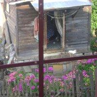 Вид из окна лучшей гостиницы :: Марина Домосилецкая