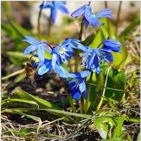 Весна... :: Евгений Кочуров