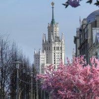 Московская весна :: Евгения Photolife