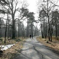 Март в парке :: Виталий