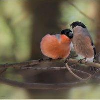 Про Любовь... :: Pepsovich