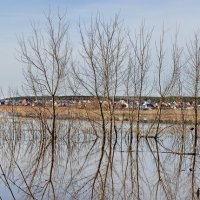 Разлив на реке Дон. :: Михаил Болдырев