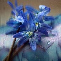 Синее на голубом :: Lusi Almaz
