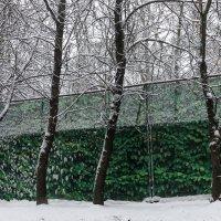 Зимний контраст :: Евгений Поляков