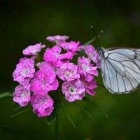 Букетик с бабочкой :: Алексей (GraAl)