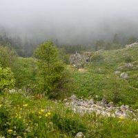 Туманное плато... :: Юлия Бабитко