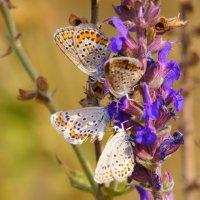 бабочки :: Стас