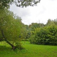 В парке :: Анатолий Цыганок