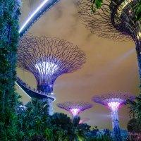 Световое шоу Supertree Grove, Сингапур. :: Edward J.Berelet