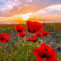 Весеннее пламя цветов :: Фёдор. Лашков