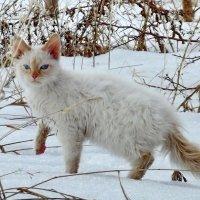 Гуляем :: Светлана Рябова-Шатунова