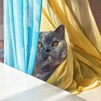 Кошки очень любят полежать на солнышке.. :: Лилия .