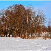 Последние дни зимы. :: Paparazzi