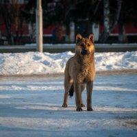 городской бродяга :: Ирина