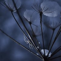 зимние небылицы :: Olena