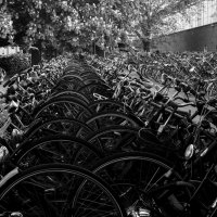 Amsterdam is a city of bicycles and bicyclists. :: Dmitry Ozersky