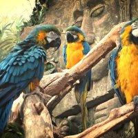 Три попугая! :: Ирина Олехнович