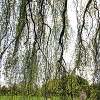 Весенний занавес. :: Liudmila LLF