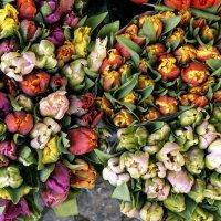 Голландские тюльпаны :: IURII