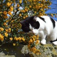 Запах весны...) :: Пётр Галилеев