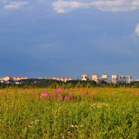 Русское поле :: Геннадий