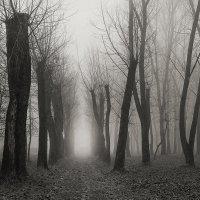 В тумане :: Елена Ерошевич