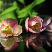Тайны тюльпанов :: Lusi Almaz