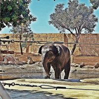 Слон :: Лариса