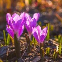 Весна в ботаническом саду! :: Фёдор. Лашков