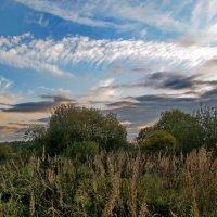 Облака над высокой травой :: Лара Симонова