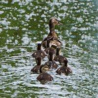 Мама и малыши :: Анна Васильева (Anna-82V)