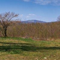 Весна в Краснодарском крае :: Игорь Сикорский