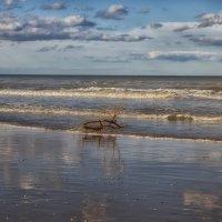 Адриатическое море :: Марина Назарова